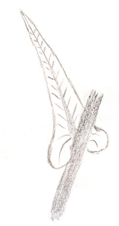 clasping_leaf[1]