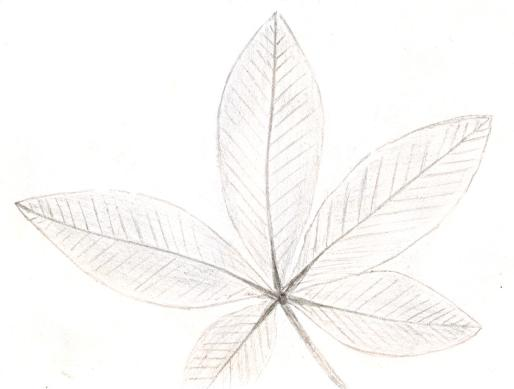 compound_leaf