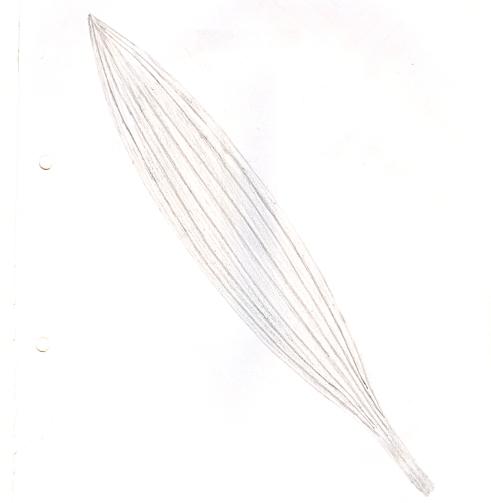 lanceolate_leaf[1]