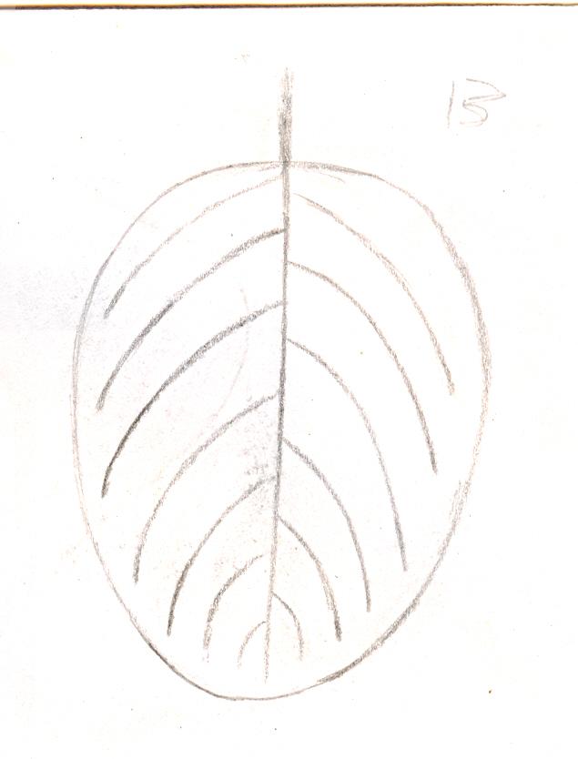 ovate_leaf[1]