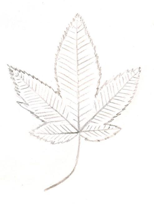 palmate_leaf[1]