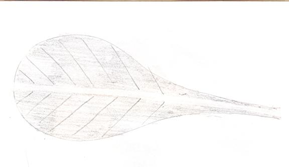 spatulate_leaf[1]