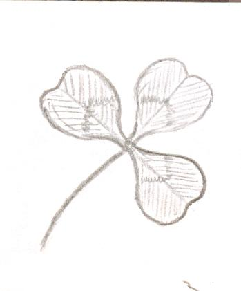 trifoliate_leaf[1]